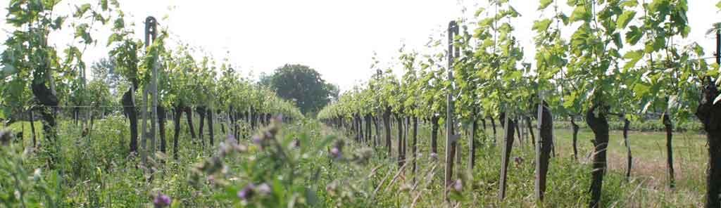 tschida vineyard