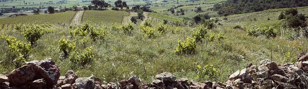 domaine des mathouans vineyard